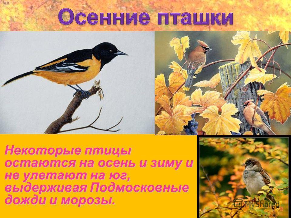 Некоторые птицы остаются на осень и зиму и не улетают на юг, выдерживая Подмосковные дожди и морозы.