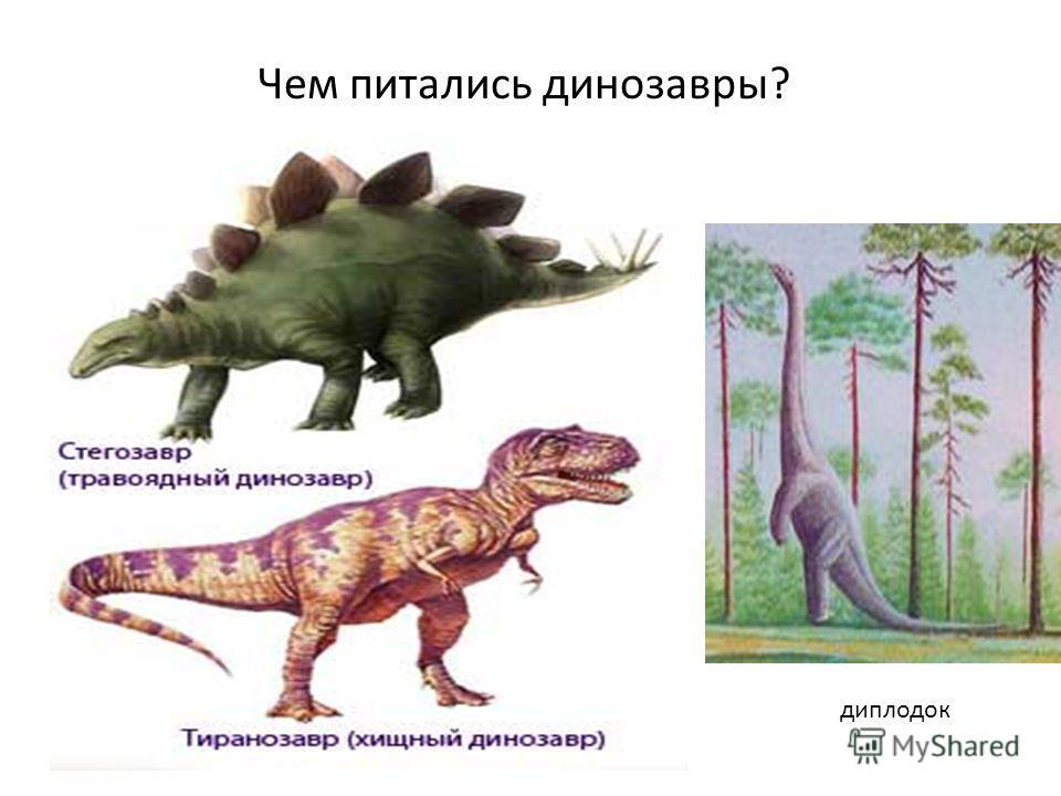 Чем питались динозавры? диплодок