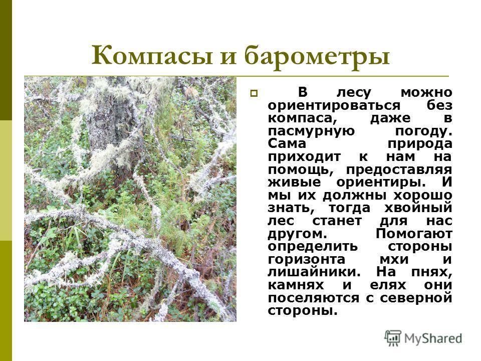 Компасы и барометры В лесу можно ориентироваться без компаса, даже в пасмурную погоду. Сама природа приходит к нам на помощь, предоставляя живые ориентиры. И мы их должны хорошо знать, тогда хвойный лес станет для нас другом. Помогают определить стор