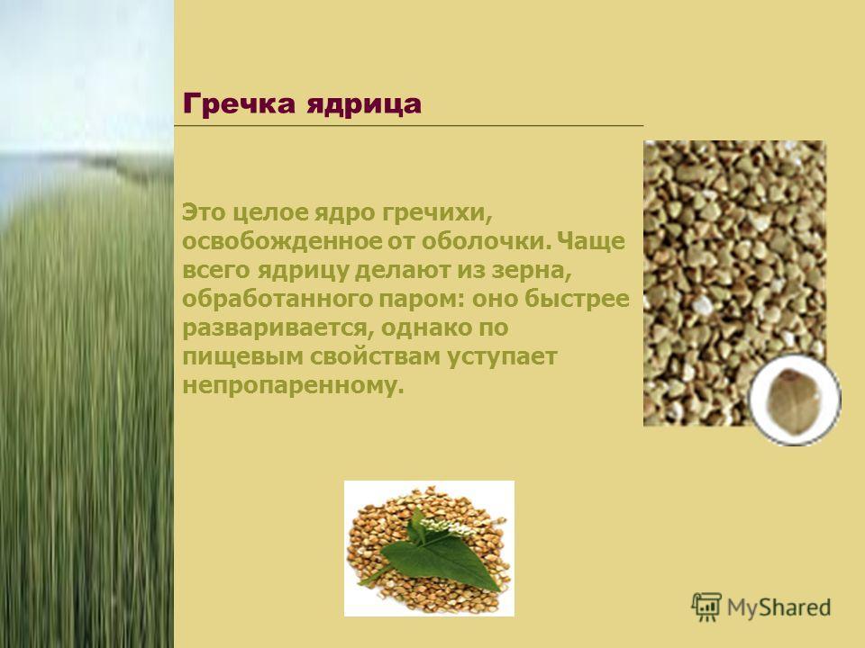 Гречка ядрица Это целое ядро гречихи, освобожденное от оболочки. Чаще всего ядрицу делают из зерна, обработанного паром: оно быстрее разваривается, однако по пищевым свойствам уступает непропаренному.
