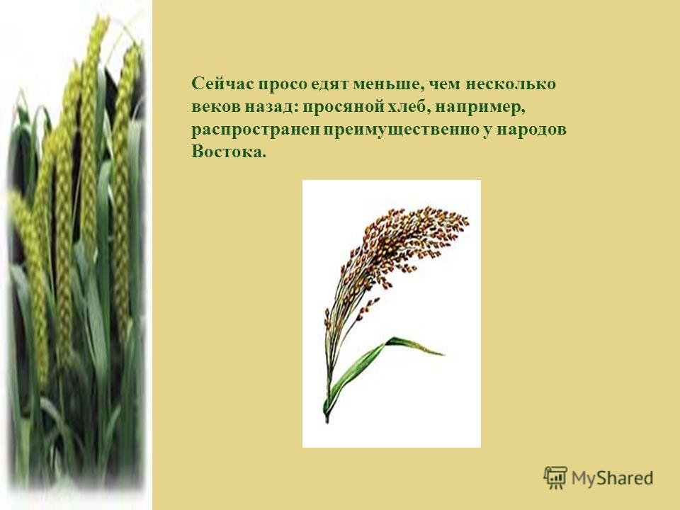 Сейчас просо едят меньше, чем несколько веков назад: просяной хлеб, например, распространен преимущественно у народов Востока.
