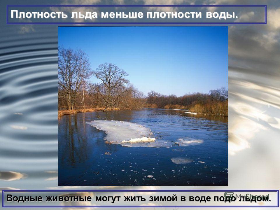 Плотность льда меньше плотности воды. Водные животные могут жить зимой в воде подо льдом.