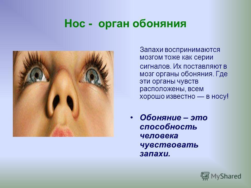 Нос - орган обоняния Запахи воспринимаются мозгом тоже как серии сигналов. Их поставляют в мозг органы обоняния. Где эти органы чувств расположены, всем хорошо известно в носу! Обоняние – это способность человека чувствовать запахи.