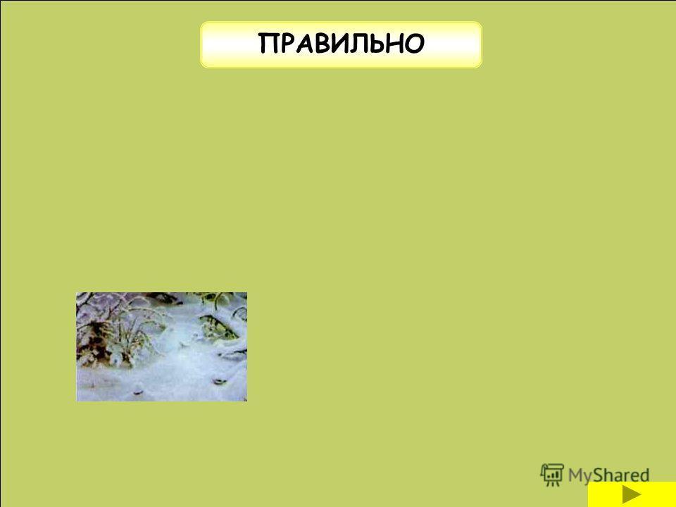Выберите правильный ответ слитноХолодно (по) зимнему раздельно через дефис
