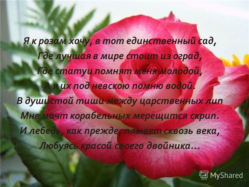 Я к розам хочу, в тот единственный сад, Где лучшая в мире стоит из оград, Где статуи помнят меня молодой, А я их под невскою помню водой. В душистой тиши между царственных лип Мне мачт корабельных мерещится скрип. И лебедь, как прежде, плывет сквозь