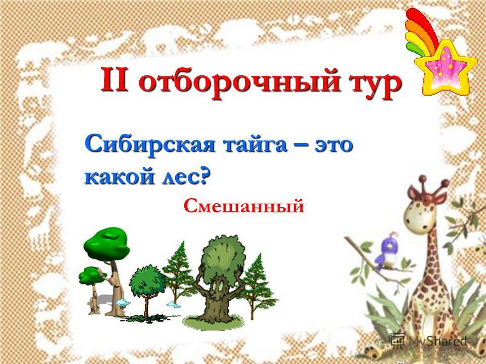 II отборочный тур Сибирская тайга – это какой лес? Смешанный