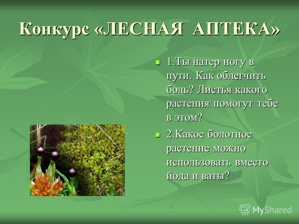 Конкурс «ЛЕСНАЯ АПТЕКА» 1.Ты натер ногу в пути. Как облегчить боль? Листья какого растения помогут тебе в этом? 1.Ты натер ногу в пути. Как облегчить боль? Листья какого растения помогут тебе в этом? 2.Какое болотное растение можно использовать вмест