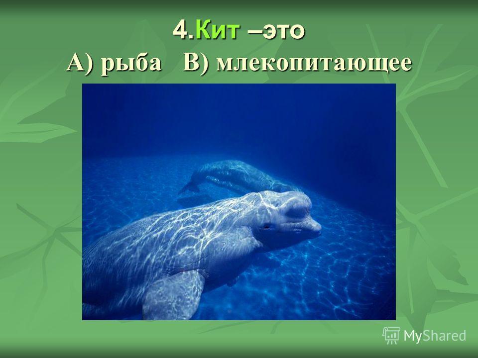 4.Кит –это А) рыба В) млекопитающее