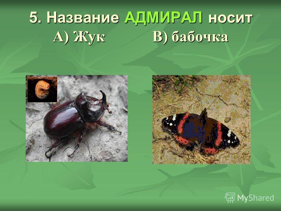 5. Название АДМИРАЛ носит А) Жук В) бабочка