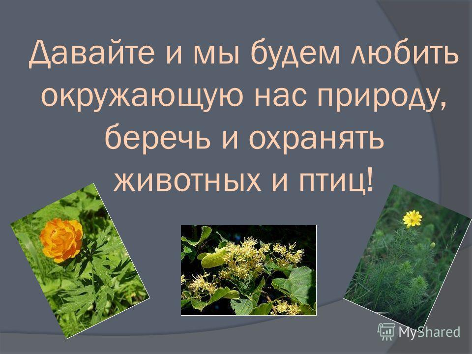 Давайте и мы будем любить окружающую нас природу, беречь и охранять животных и птиц!