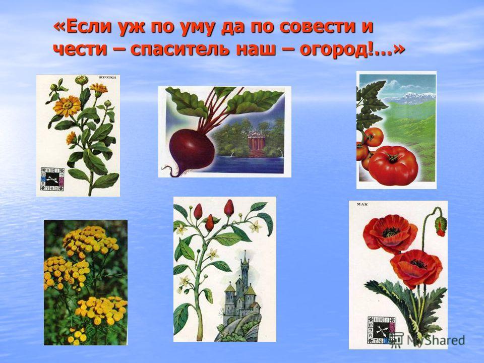 «Если уж по уму да по совести и чести – спаситель наш – огород!…»
