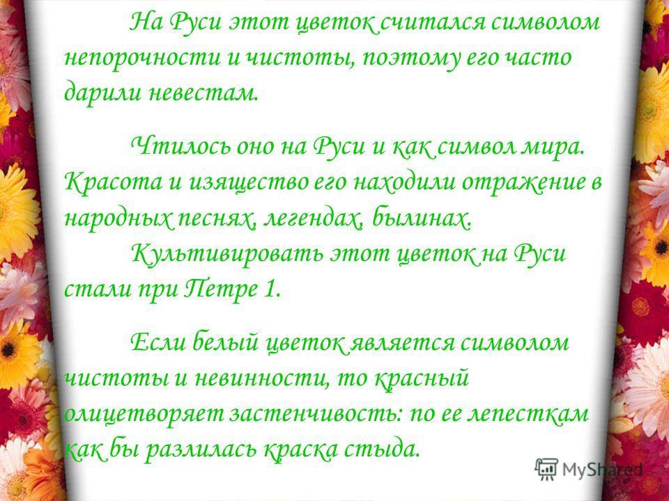 На Руси этот цветок считался символом непорочности и чистоты, поэтому его часто дарили невестам. Чтилось оно на Руси и как символ мира. Красота и изящество его находили отражение в народных песнях, легендах, былинах. Культивировать этот цветок на Рус