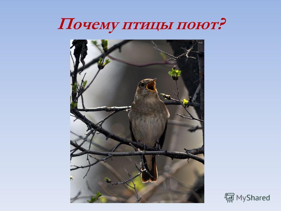Почему птицы поют?