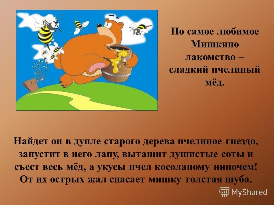 Но самое любимое Мишкино лакомство – сладкий пчелиный мёд. Найдет он в дупле старого дерева пчелиное гнездо, запустит в него лапу, вытащит душистые соты и съест весь мёд, а укусы пчел косолапому нипочем! От их острых жал спасает мишку толстая шуба.