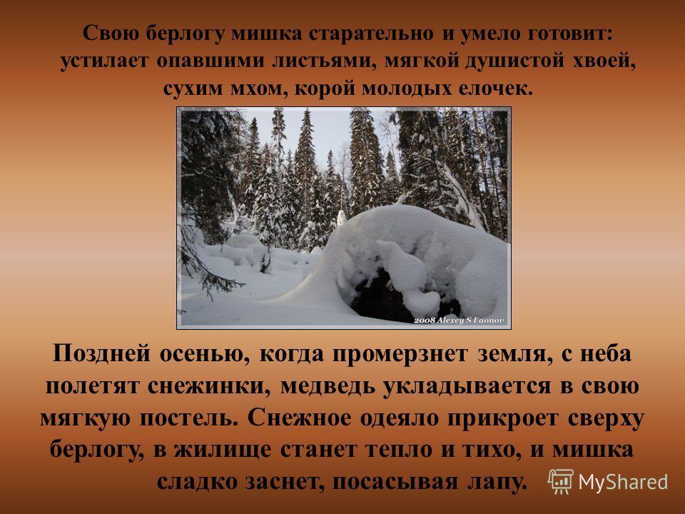 Свою берлогу мишка старательно и умело готовит: устилает опавшими листьями, мягкой душистой хвоей, сухим мхом, корой молодых елочек. Поздней осенью, когда промерзнет земля, с неба полетят снежинки, медведь укладывается в свою мягкую постель. Снежное