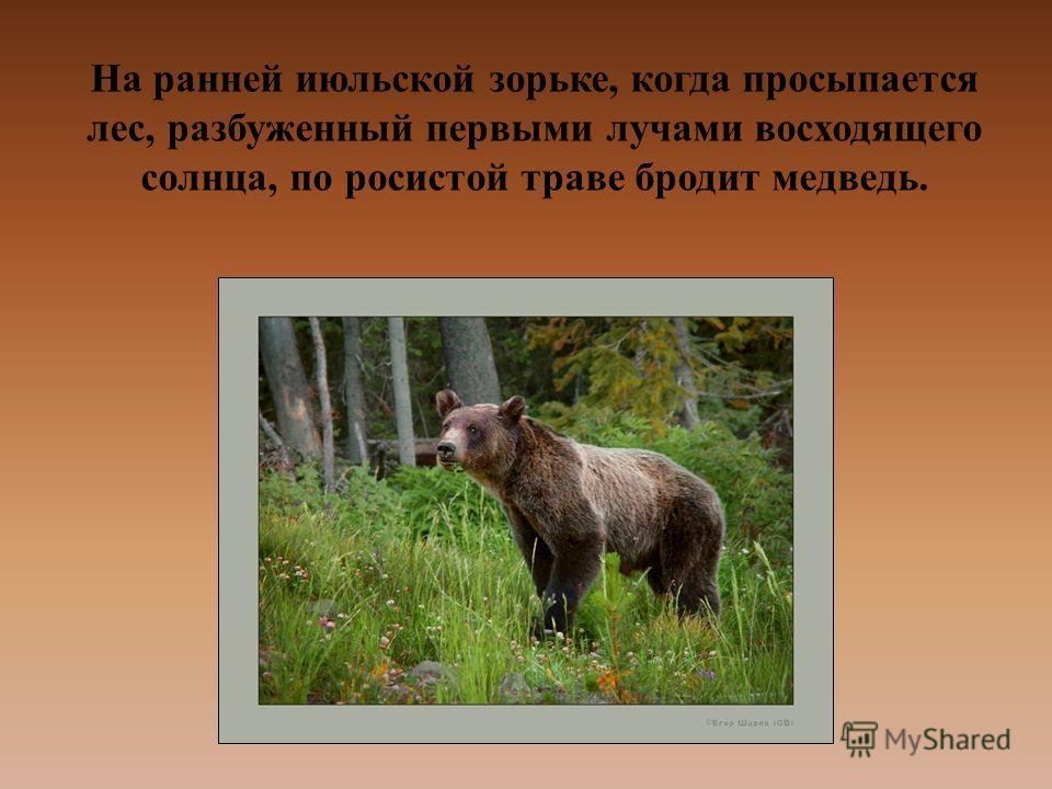 На ранней июльской зорьке, когда просыпается лес, разбуженный первыми лучами восходящего солнца, по росистой траве бродит медведь.