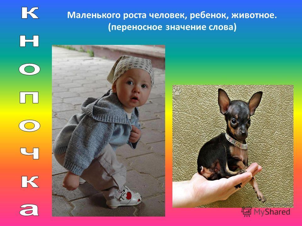 Маленького роста человек, ребенок, животное. (переносное значение слова)