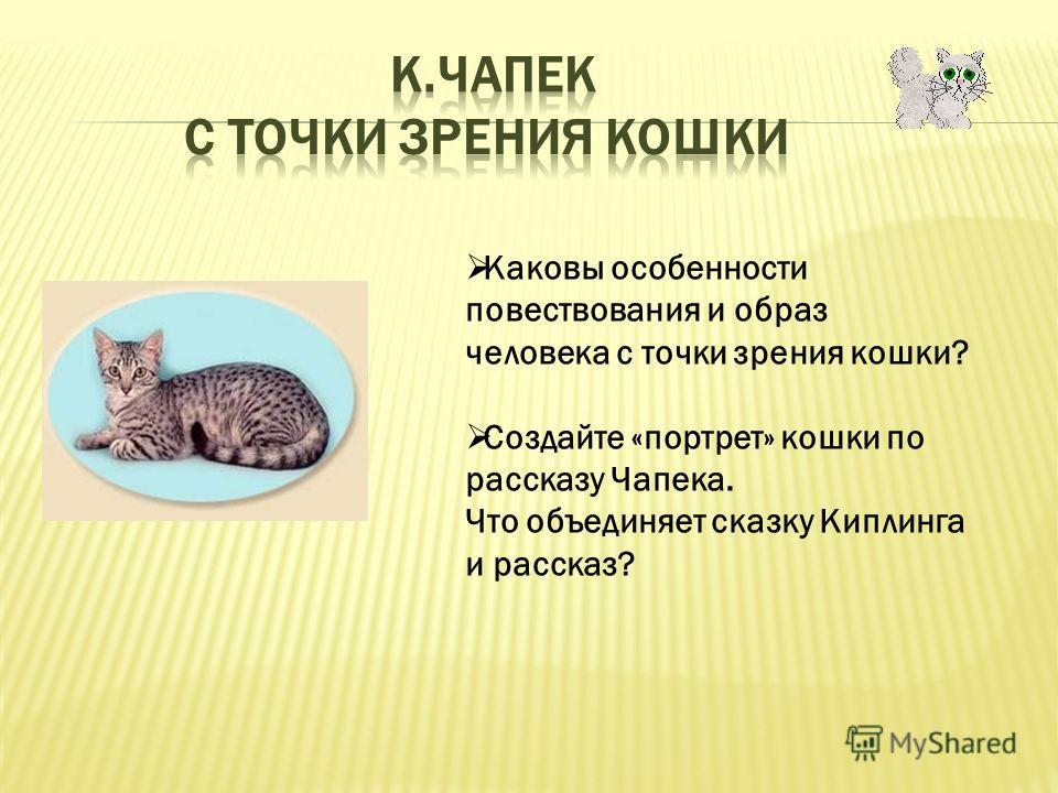 Каковы особенности повествования и образ человека с точки зрения кошки? Создайте «портрет» кошки по рассказу Чапека. Что объединяет сказку Киплинга и рассказ?