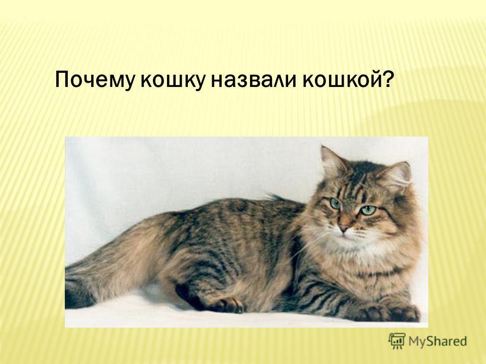 Почему кошку назвали кошкой?