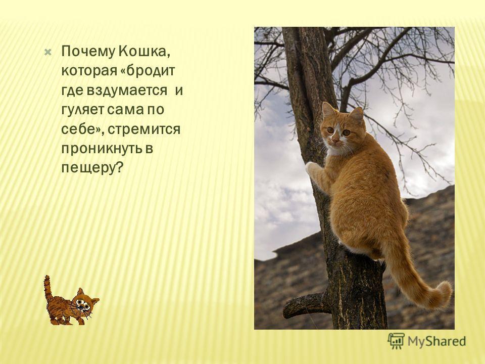 Почему Кошка, которая «бродит где вздумается и гуляет сама по себе», стремится проникнуть в пещеру?