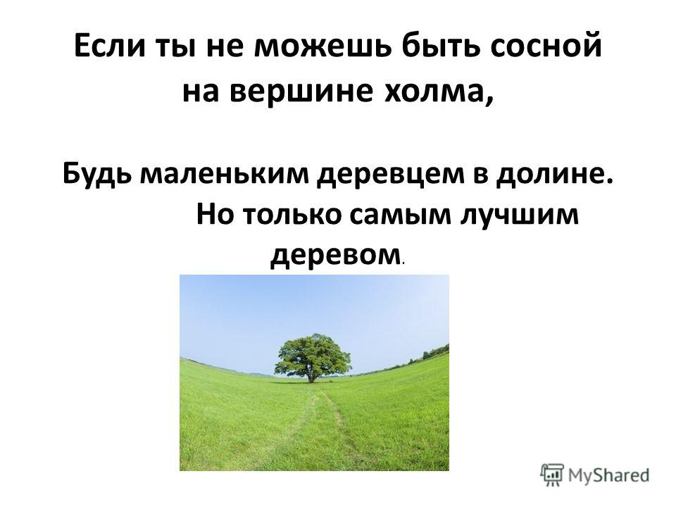 Если ты не можешь быть сосной на вершине холма, Будь маленьким деревцем в долине. Но только самым лучшим деревом.