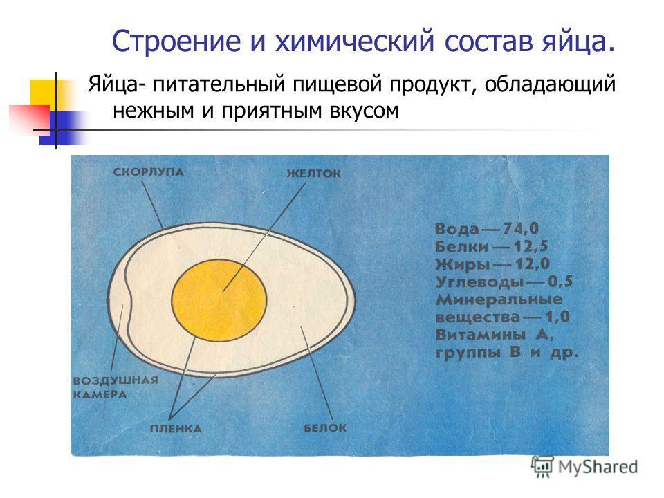 Строение и химический состав яйца. Яйца- питательный пищевой продукт, обладающий нежным и приятным вкусом