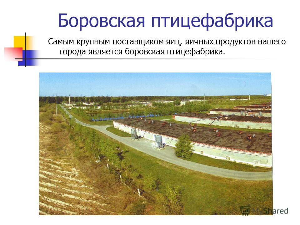 Боровская птицефабрика Самым крупным поставщиком яиц, яичных продуктов нашего города является боровская птицефабрика.