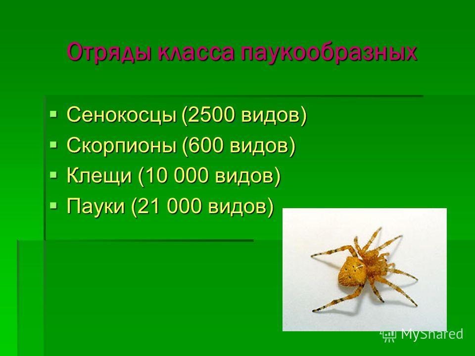 Отряды класса паукообразных Сенокосцы (2500 видов) Сенокосцы (2500 видов) Скорпионы (600 видов) Скорпионы (600 видов) Клещи (10 000 видов) Клещи (10 000 видов) Пауки (21 000 видов) Пауки (21 000 видов)
