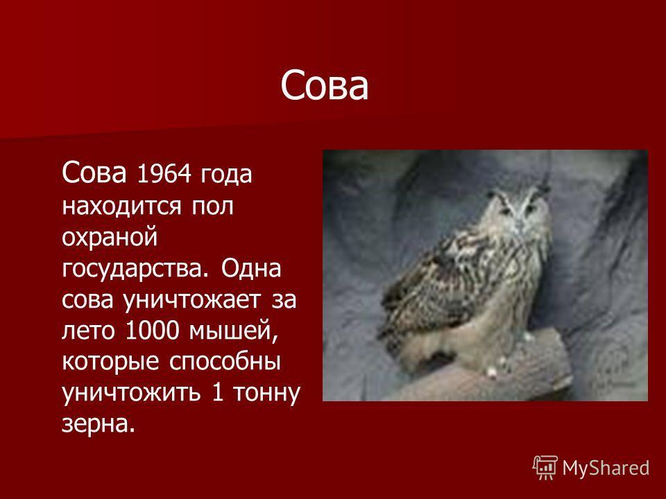 Сова Сова 1964 года находится пол охраной государства. Одна сова уничтожает за лето 1000 мышей, которые способны уничтожить 1 тонну зерна.