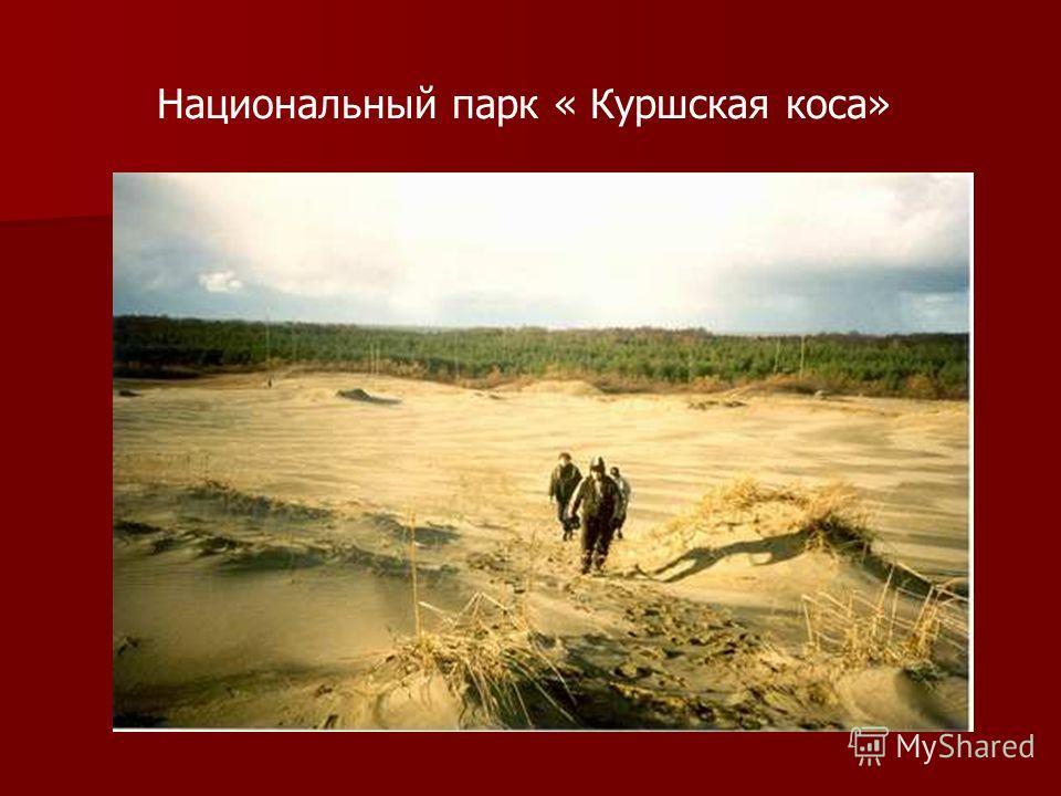 Национальный парк « Куршская коса»