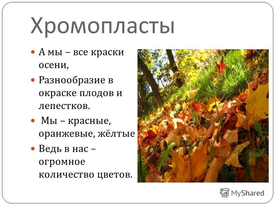 Хромопласты А мы – все краски осени, Разнообразие в окраске плодов и лепестков. Мы – красные, оранжевые, жёлтые Ведь в нас – огромное количество цветов.