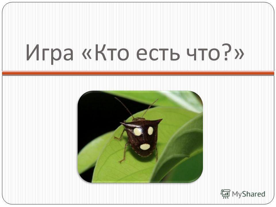 Игра « Кто есть что ?»