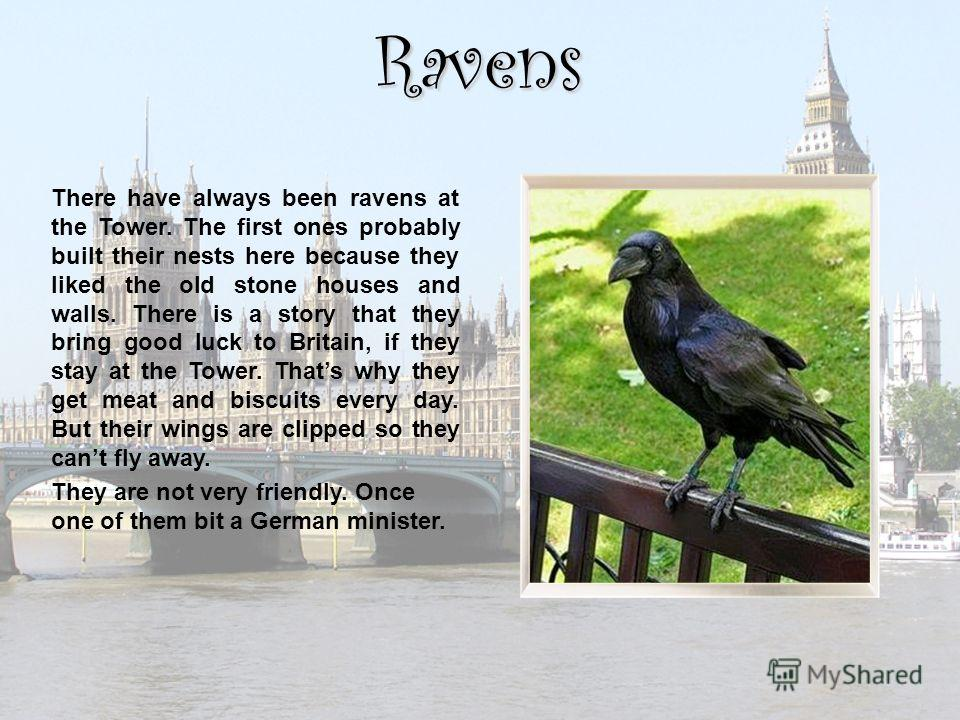 Ravens There have always been ravens at the Tower. The first ones probably built their nests here because they liked the old stone houses and walls. There is a story that they bring good luck to Britain, if they stay at the Tower. Thats why they get