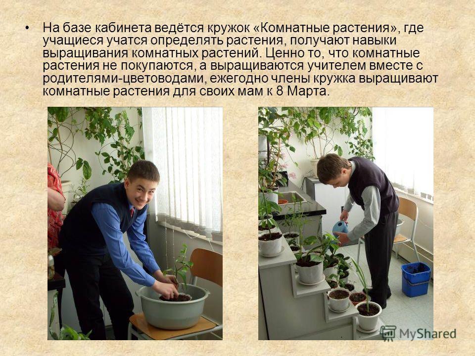 На базе кабинета ведётся кружок «Комнатные растения», где учащиеся учатся определять растения, получают навыки выращивания комнатных растений. Ценно то, что комнатные растения не покупаются, а выращиваются учителем вместе с родителями-цветоводами, еж