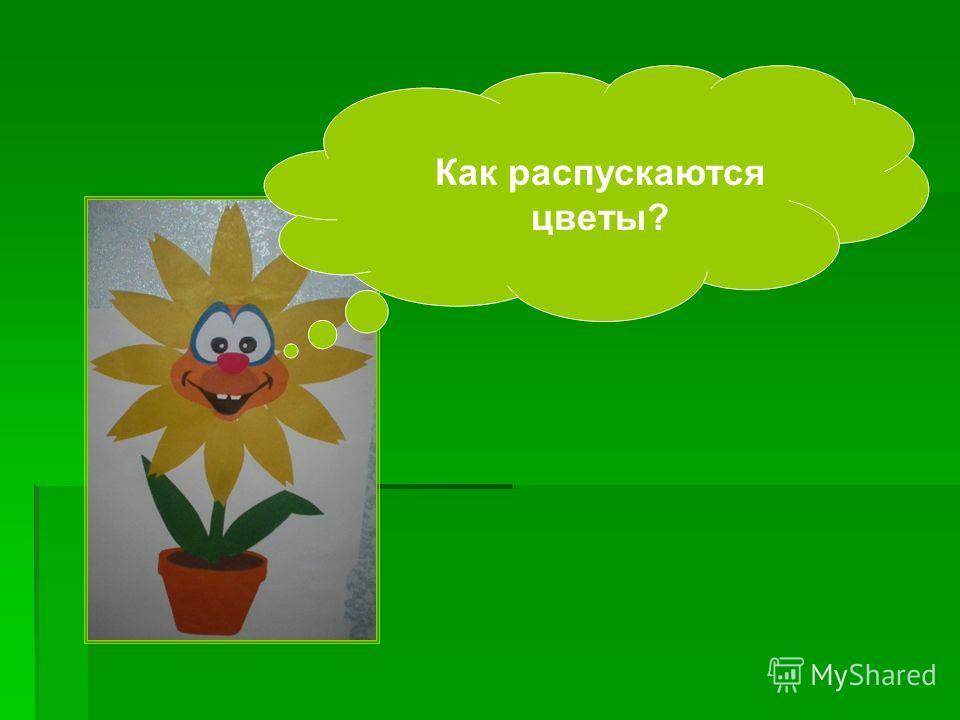 Как распускаются цветы?
