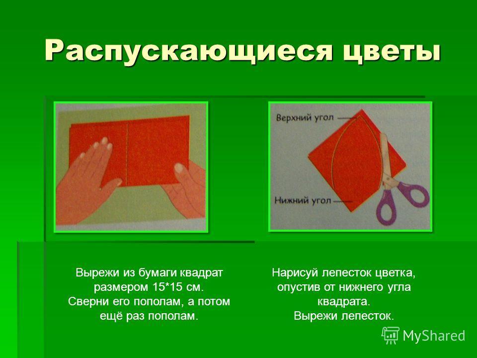 Распускающиеся цветы Вырежи из бумаги квадрат размером 15*15 см. Сверни его пополам, а потом ещё раз пополам. Нарисуй лепесток цветка, опустив от нижнего угла квадрата. Вырежи лепесток.