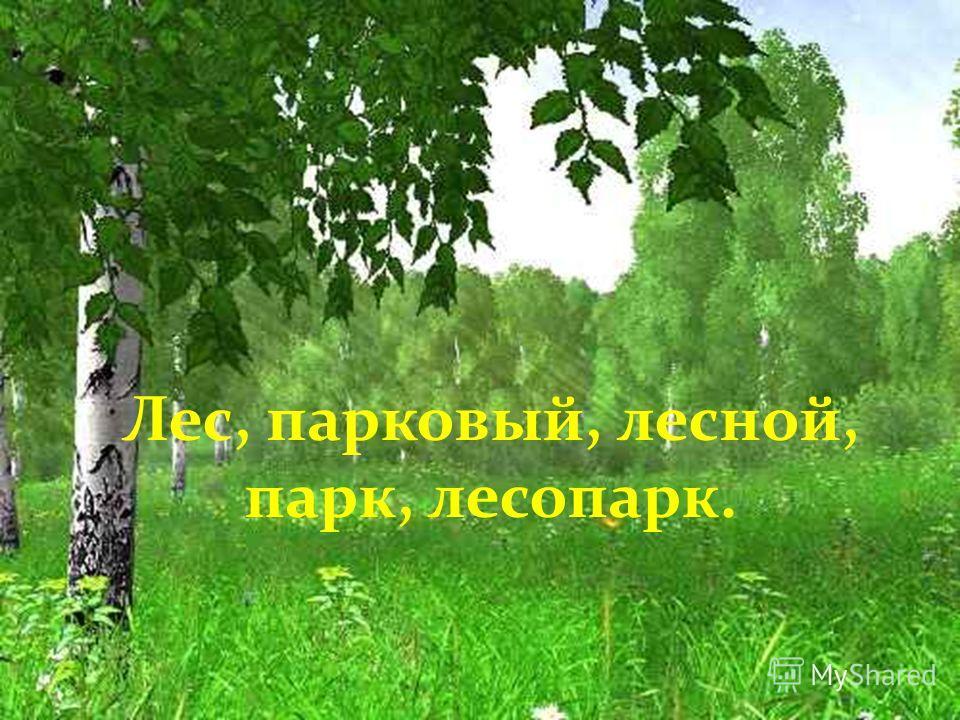 Лес, парковый, лесной, парк, лесопарк.