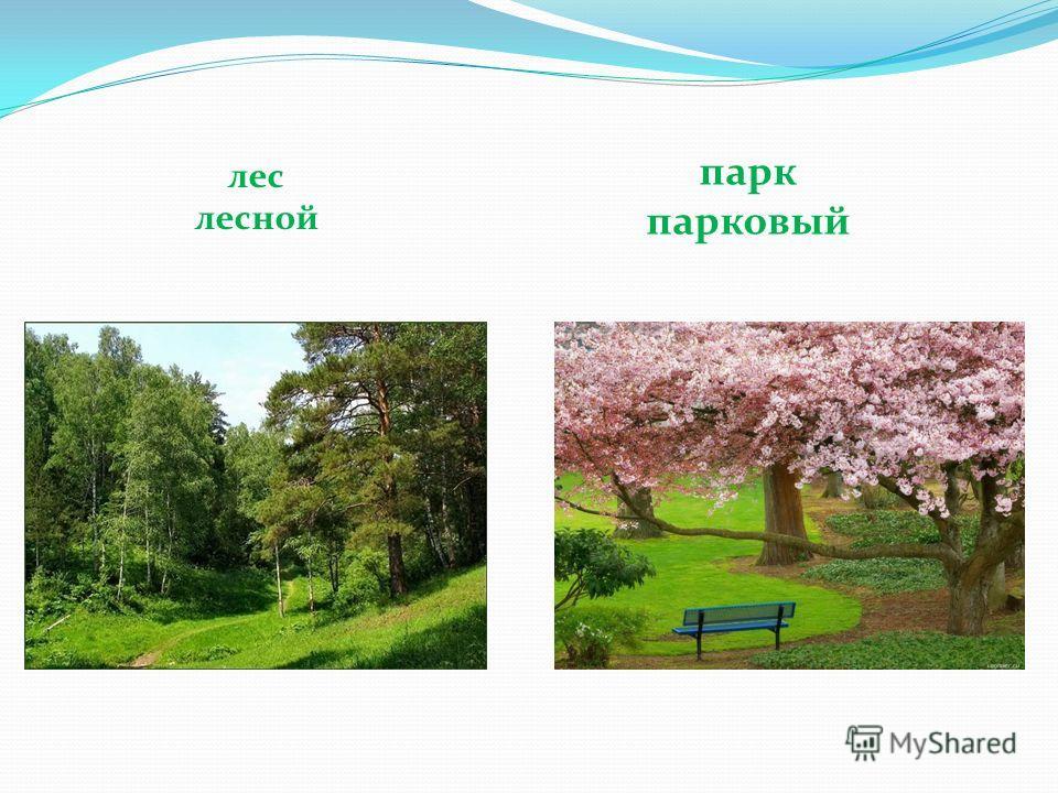 лес лесной парк парковый
