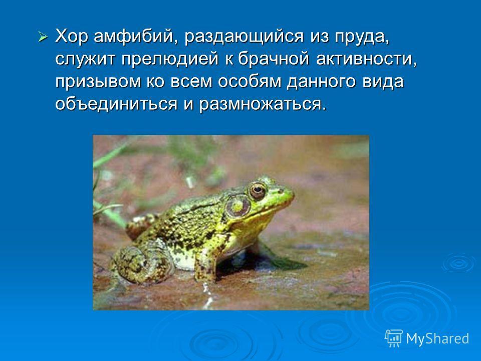 Хор амфибий, раздающийся из пруда, служит прелюдией к брачной активности, призывом ко всем особям данного вида объединиться и размножаться. Хор амфибий, раздающийся из пруда, служит прелюдией к брачной активности, призывом ко всем особям данного вида