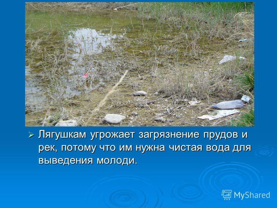 Лягушкам угрожает загрязнение прудов и рек, потому что им нужна чистая вода для выведения молоди. Лягушкам угрожает загрязнение прудов и рек, потому что им нужна чистая вода для выведения молоди.