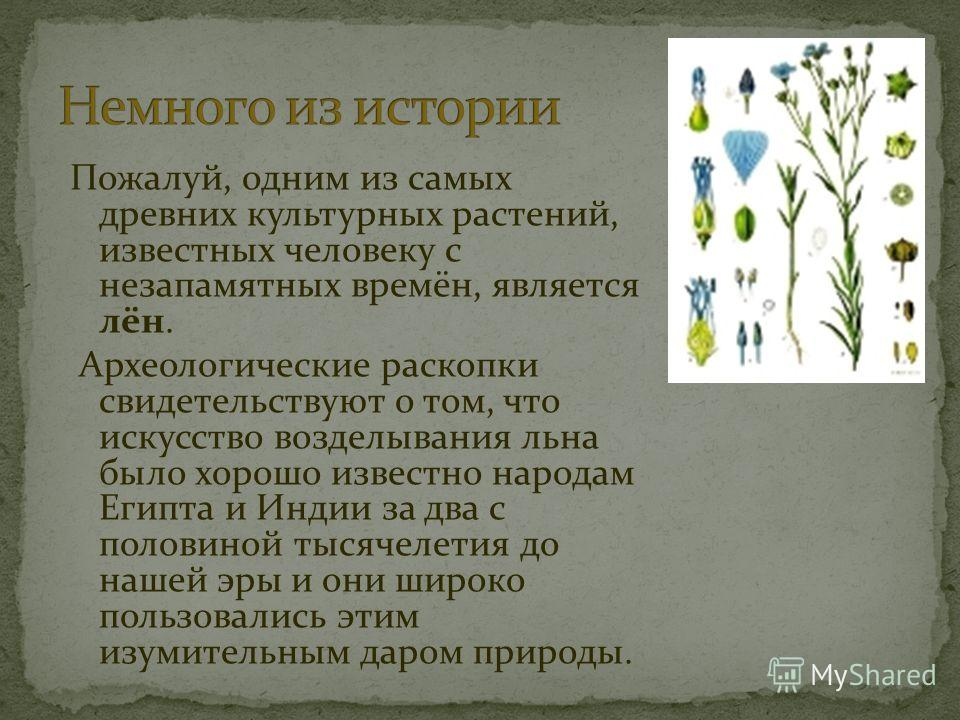 Пожалуй, одним из самых древних культурных растений, известных человеку с незапамятных времён, является лён. Археологические раскопки свидетельствуют о том, что искусство возделывания льна было хорошо известно народам Египта и Индии за два с половино