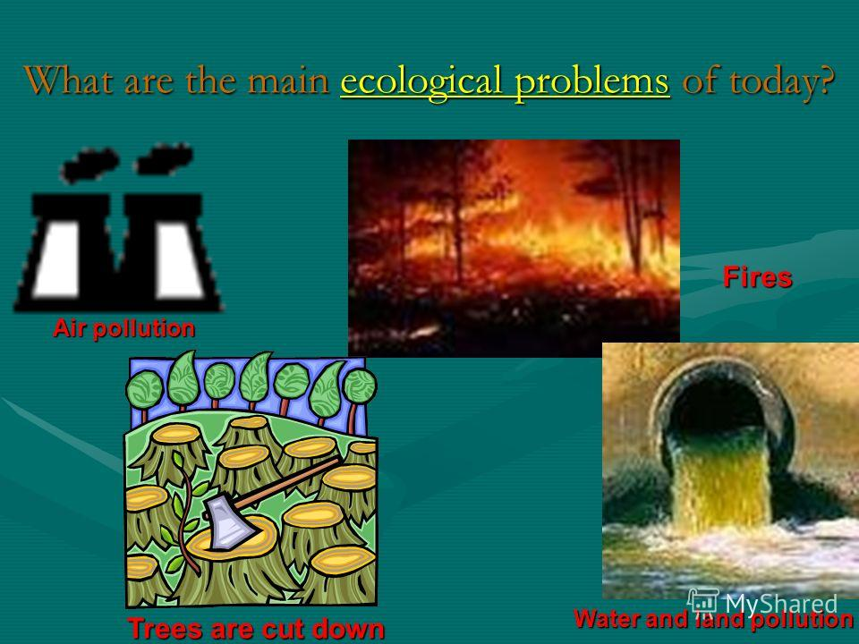 What science studies nature? Ecology