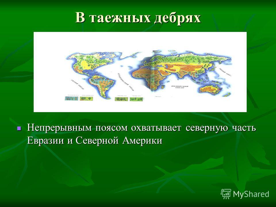 В таежных дебрях Непрерывным поясом охватывает северную часть Евразии и Северной Америки Непрерывным поясом охватывает северную часть Евразии и Северной Америки