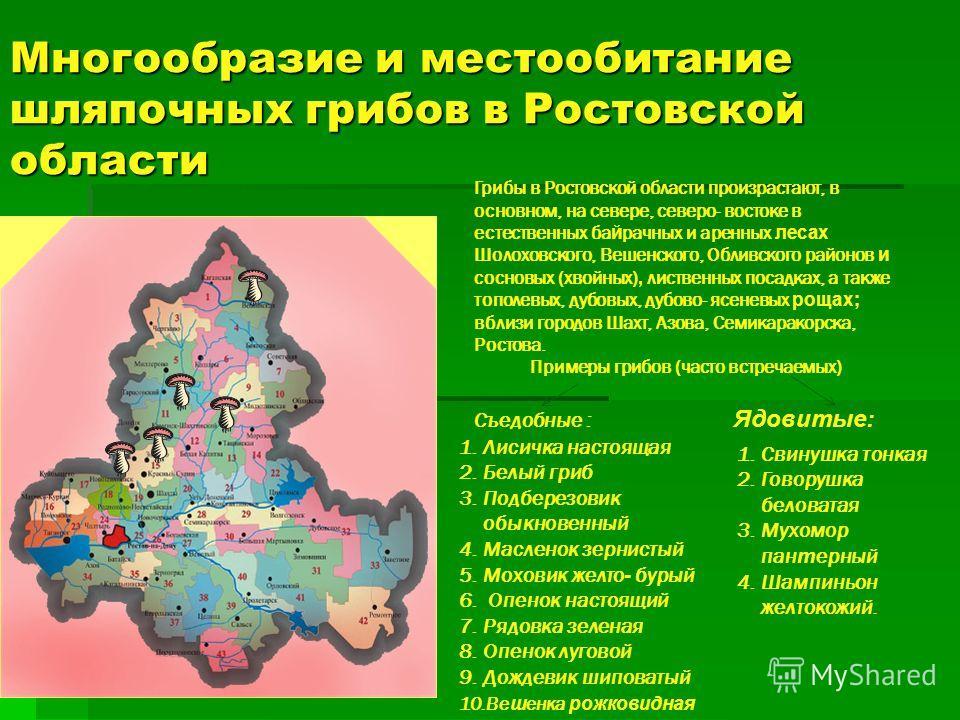 Многообразие и местообитание шляпочных грибов в Ростовской области Грибы в Ростовской области произрастают, в основном, на севере, северо- востоке в естественных ба й рачных и аренных лесах Шолоховского, Вешенского, Обливского районов и сосновых (хво