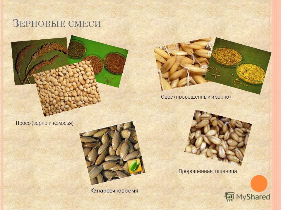 Овес (пророщенный и зерно) Просо (зерно и колосья) Пророщенная пшеница З ЕРНОВЫЕ СМЕСИ Канареечное семя