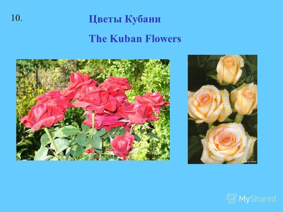 Цветы Кубани The Kuban Flowers 10.