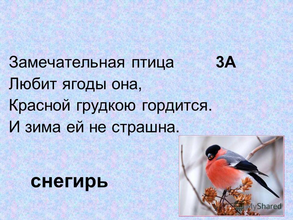 Замечательная птица 3А Любит ягоды она, Красной грудкою гордится. И зима ей не страшна. снегирь