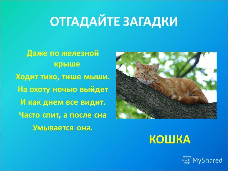 ОТГАДАЙТЕ ЗАГАДКИ Даже по железной крыше Ходит тихо, тише мыши. На охоту ночью выйдет И как днем все видит. Часто спит, а после сна Умывается она. КОШКА