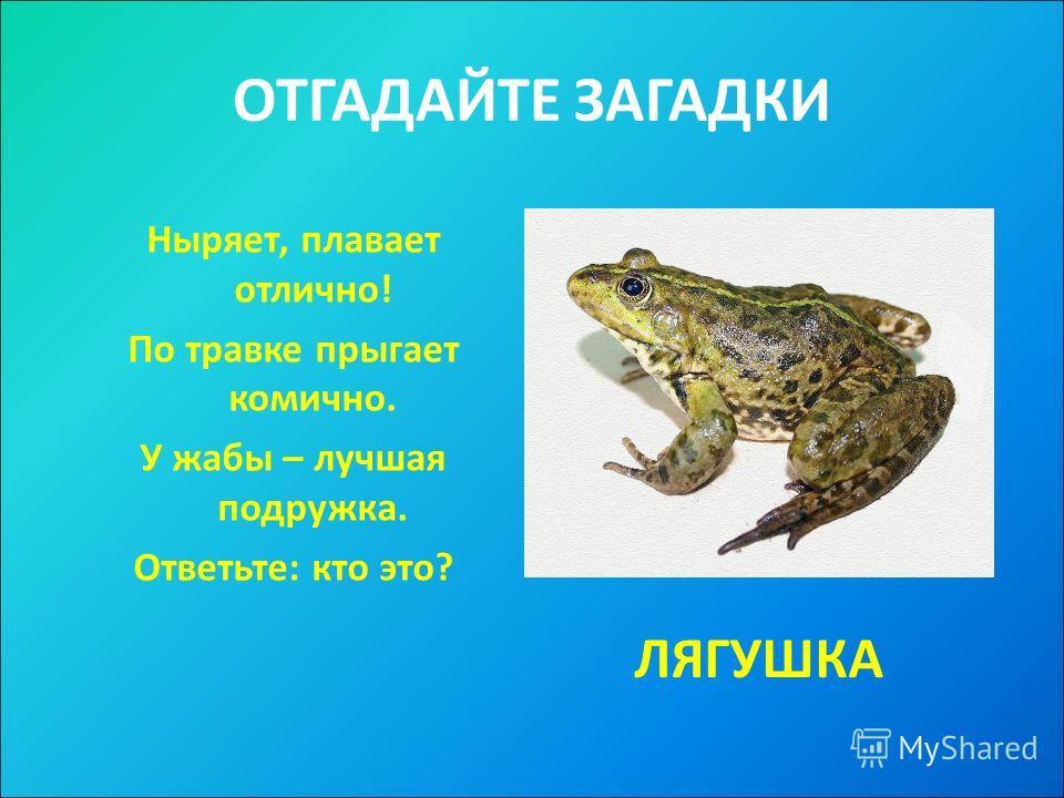 ОТГАДАЙТЕ ЗАГАДКИ Ныряет, плавает отлично! По травке прыгает комично. У жабы – лучшая подружка. Ответьте: кто это? ЛЯГУШКА