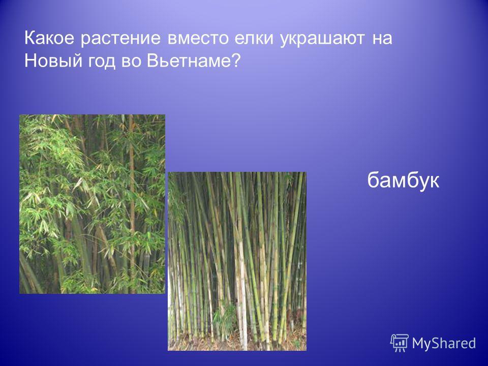 Какое растение вместо елки украшают на Новый год во Вьетнаме? бамбук